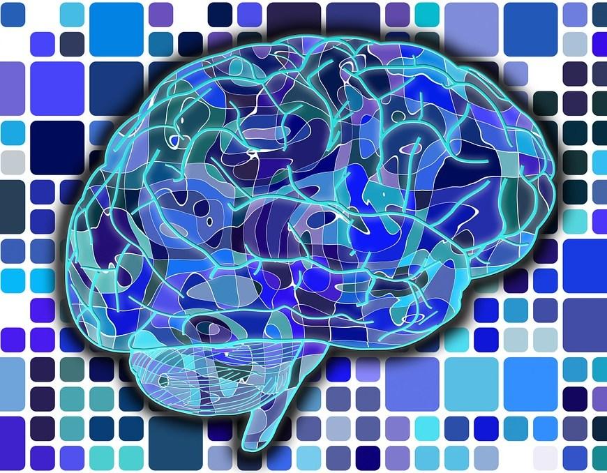 Brain Map Photo