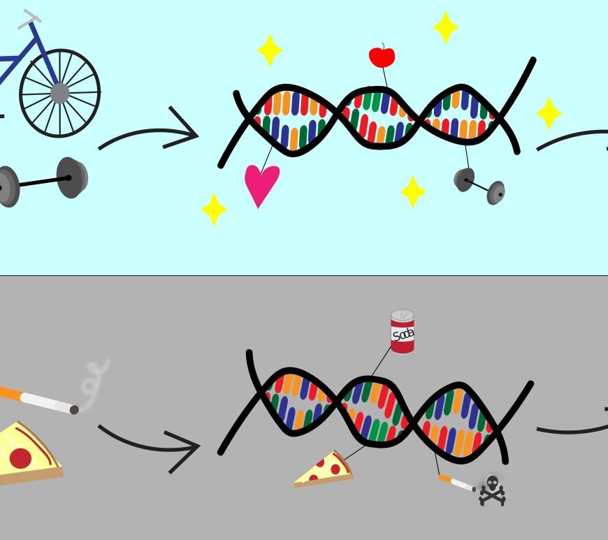 Epigenetics_large4