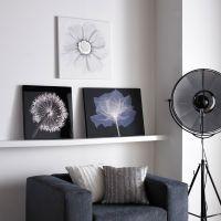 X-Ray Rose Wall Art - GrahamBrownUS