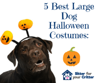 The 5 Best Halloween Large Dog Costume Ideas