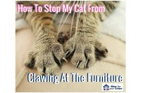 How To Stop My Cat From Clawing At The Furniture - Sitter ...