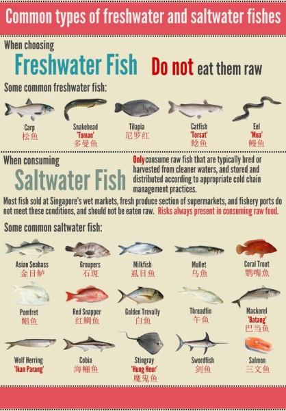 Fresh Saltwater Fish Chart giveaway norwegian salmon yusheng from