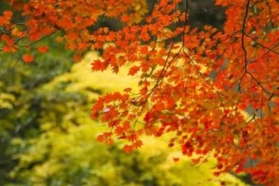 高台寺の紅葉2016のライトアップと見頃は?紅葉スポットはココ!