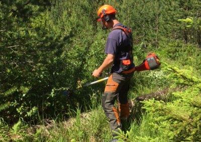 Skogkultur