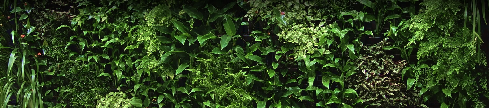 Stylized Australian Shop Greenwall Solutions Au Vertical Garden Products Greenwall Vertical Garden Solutions garden Vertical Gardens Solutions