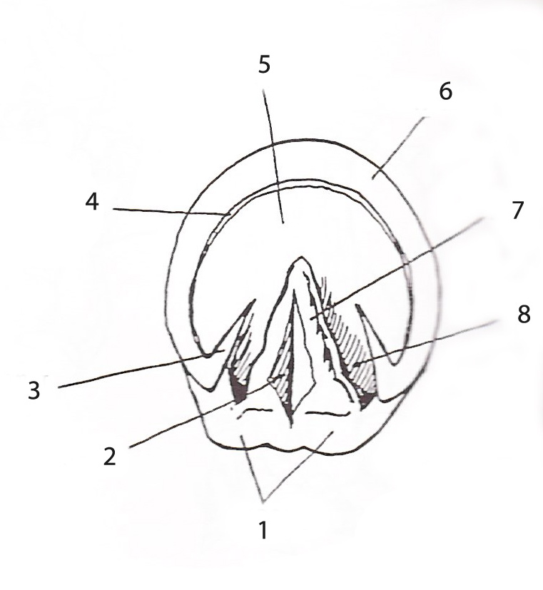 diagram bottom of a foot