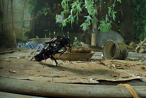 Bugs rhinoceros beetle