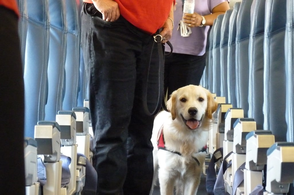 Pet Carrier Rental Delta Will No Longer Allow Passengers To Check Pets As