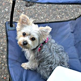Paisley My Lap Dog