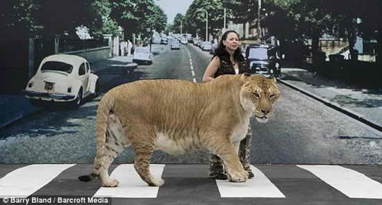 Самая домашняя кошка