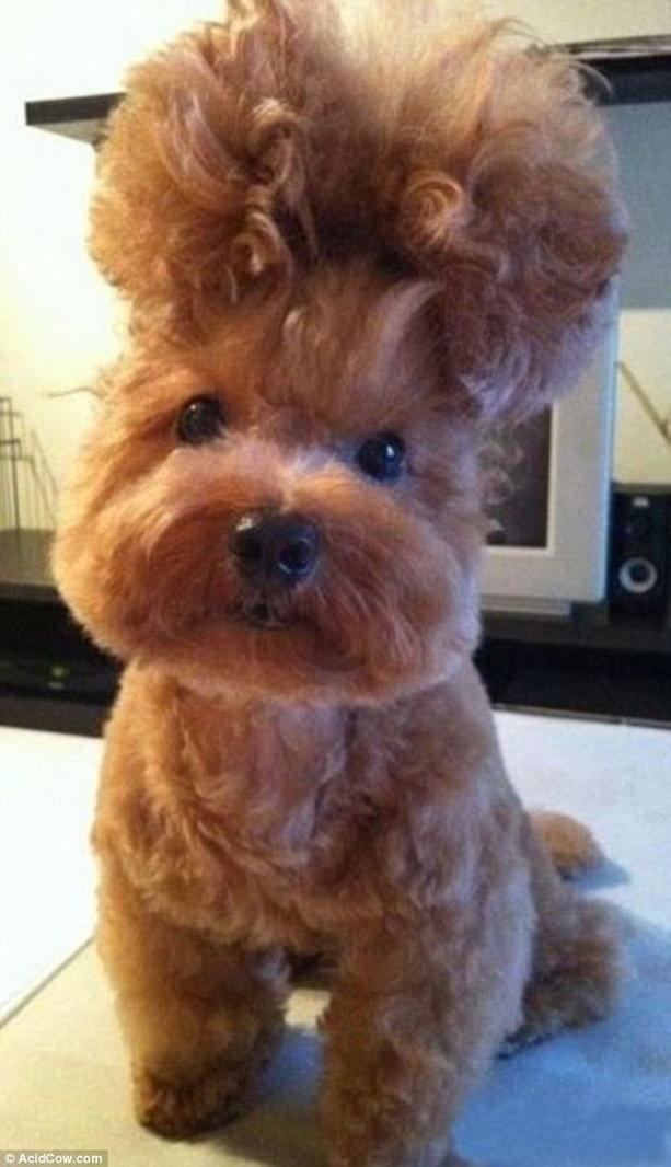 модная стрижка собаки