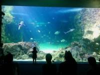 Bill Gates House Aquarium
