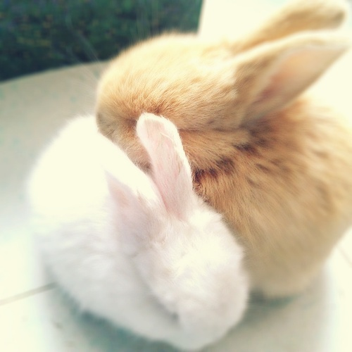 Cute White Baby Rabbits Wallpapers Cute Pictures The Slacktiverse