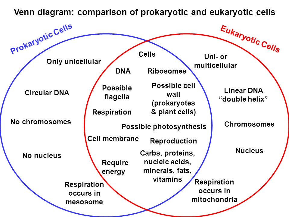 venn diagram comparing prokaryotic and eukaryotic cells