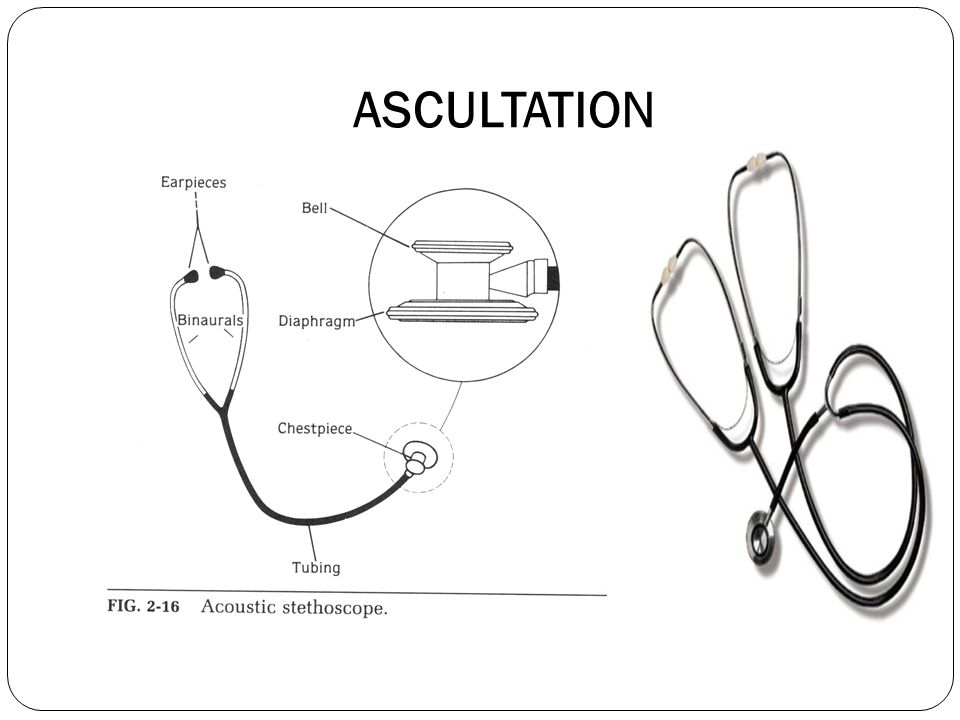 NORMAL BREATH SOUNDS DESCRIPTION VESICULAR - Auto Electrical Wiring