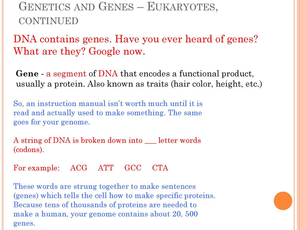 Chromosome In A Sentence Ch 8 Microbial Genetics Pgs Ppt Download