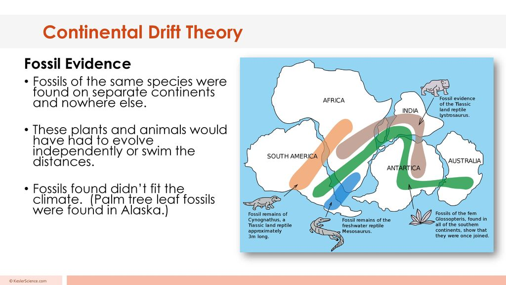 Continental Drift Theory - ppt download