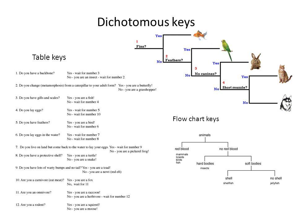 Dichotomous Key Template - Costumepartyrun - dichotomous key template word