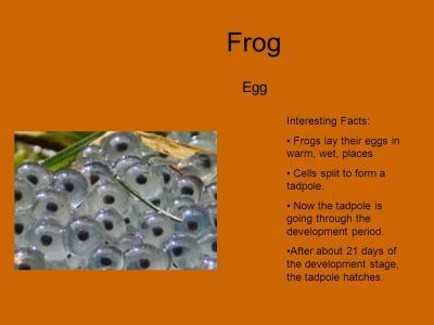 FROGS Mikayla. - ppt video online download