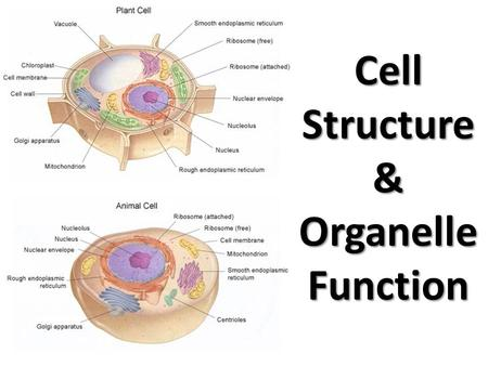 Cell parts Organelles and functions - ppt video online download