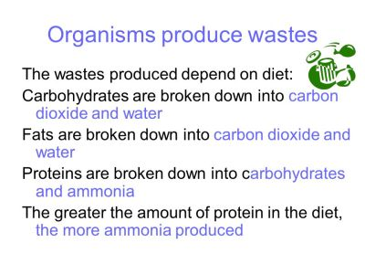 Requirements of living things - ppt video online download
