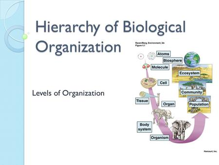 The Hierarchy or Levels of Biological Organization - ppt video