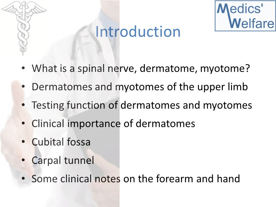 SESSION 5 Dermatomes  myotomes Forearm  hand - ppt video online