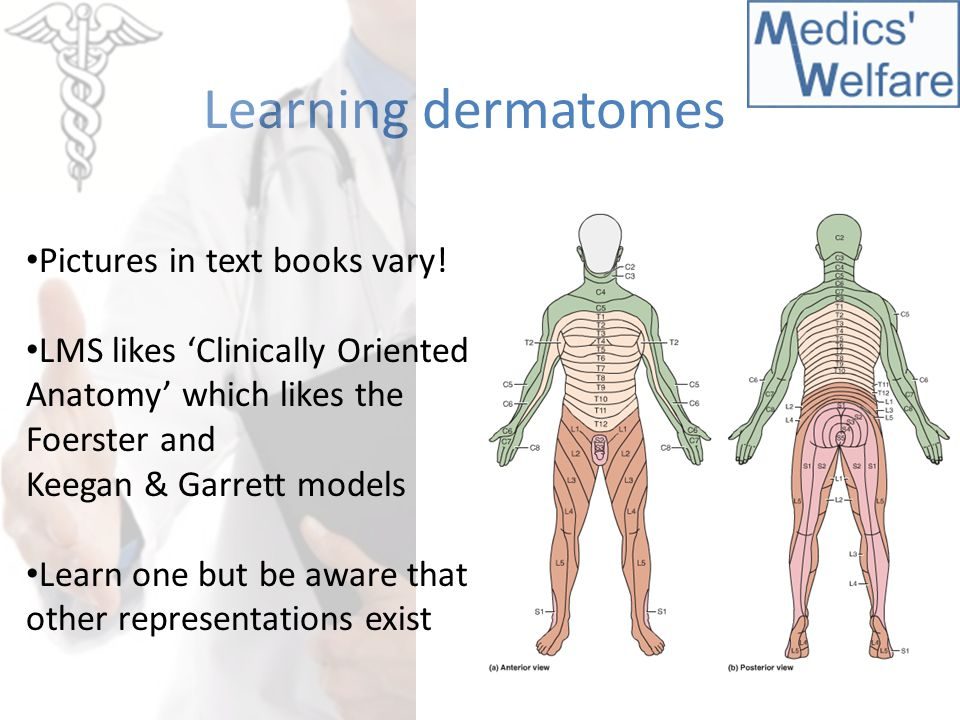 Dorable Human Dermatome Component - Human Anatomy Images