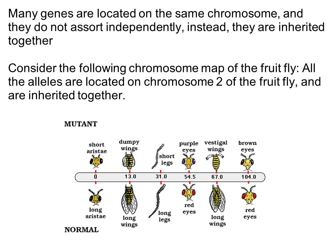 Chromosome Map Genetics Mendel And Beyond Ppt Video Online Download