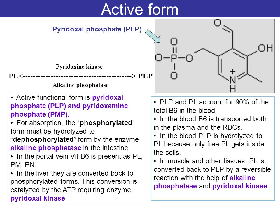 active form of b6 - Pinephandshakeapp - p-l form