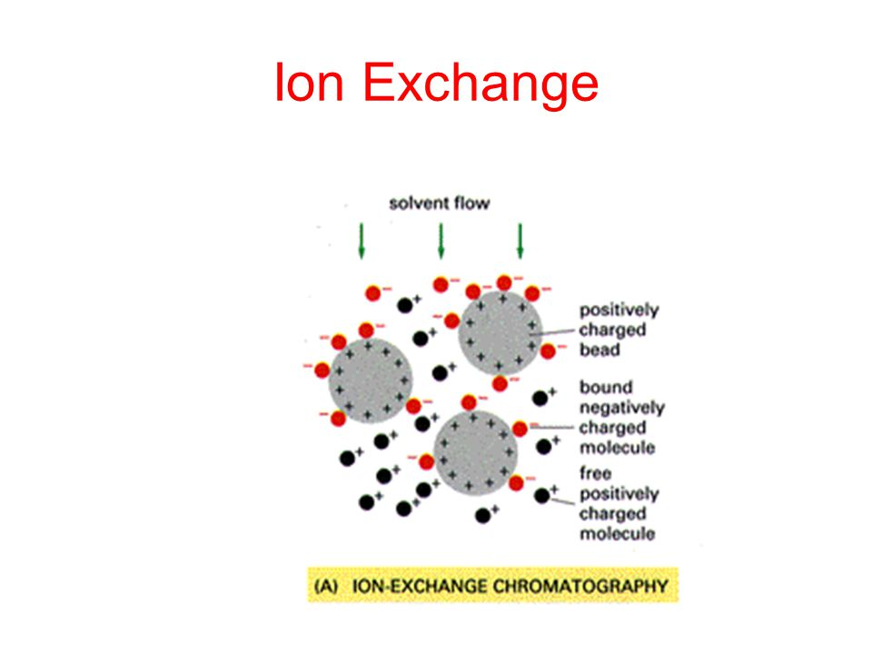 Ion exchange lab Research paper Service qbtermpaperhifcgloriajohnson - cation exchange chromatography