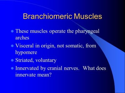 APPENDICULAR MUSCLES Muscles of girdles and appendages - ppt video online download