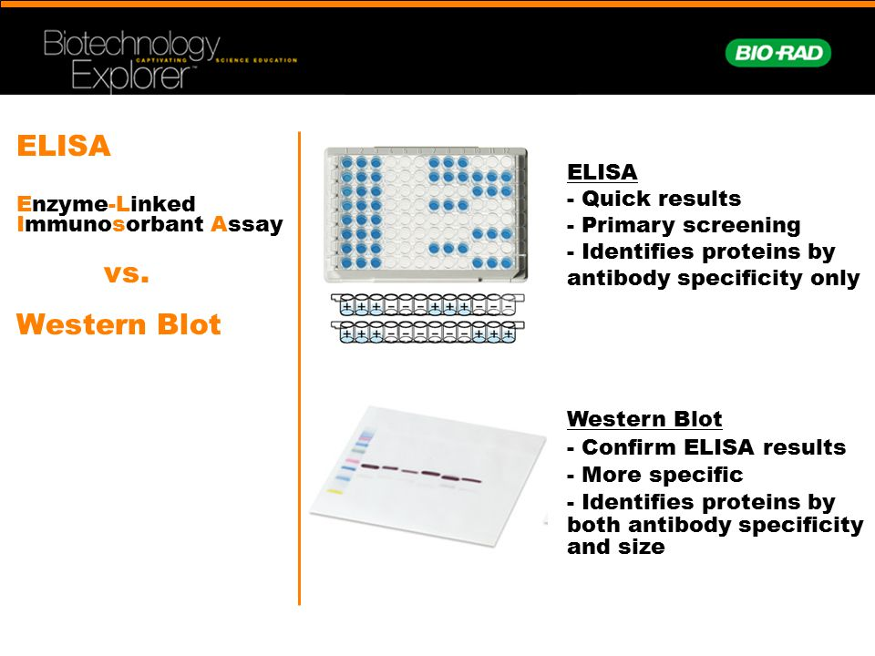 Comparative Proteomics Kit II Western Blot Module - ppt video - western blot