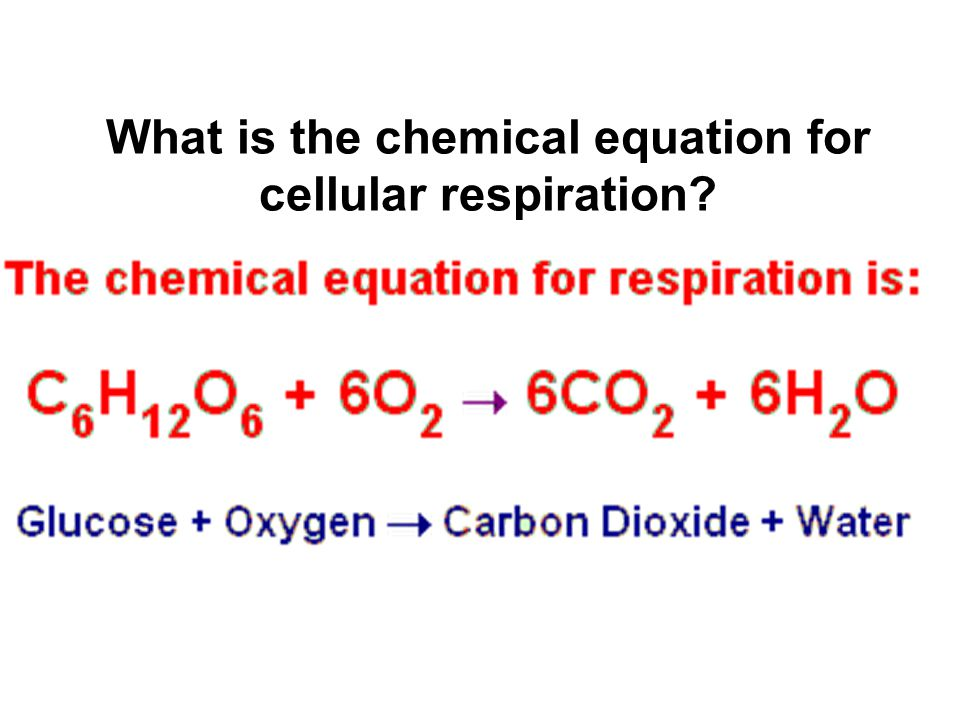 An analysis of chemical reactions in cellular respiration Coursework - what is an analysis