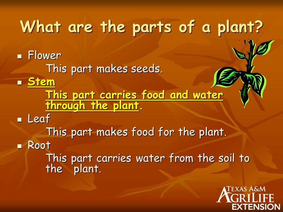 Kids Growing Plants for all uses - ppt video online download