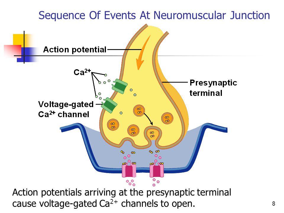 NEUROMUSCULAR JUNCTION - ppt video online download - neuromuscular junction