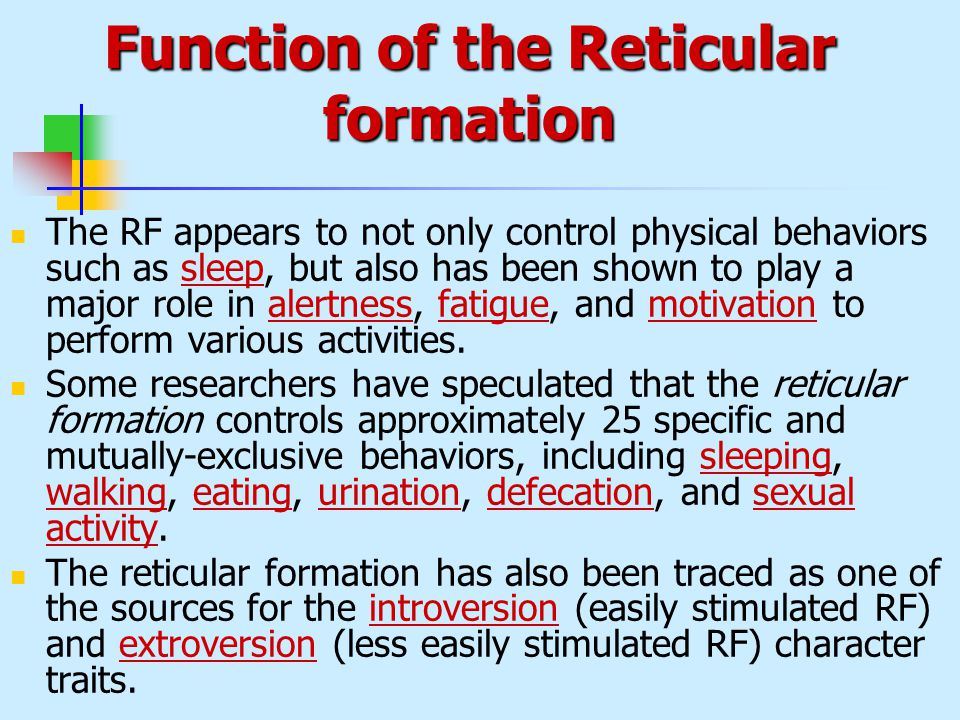 Function of the reticular formation Custom paper Writing Service