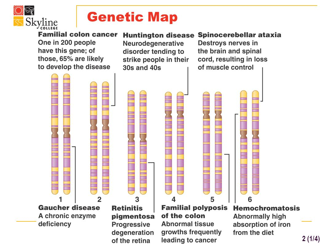 Chromosome Map Chapter 20 Dna And Biotechnology Bio 130 Human Biology