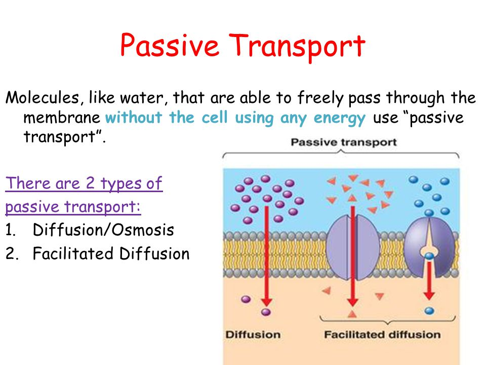 types of passive transport xv-gimnazija