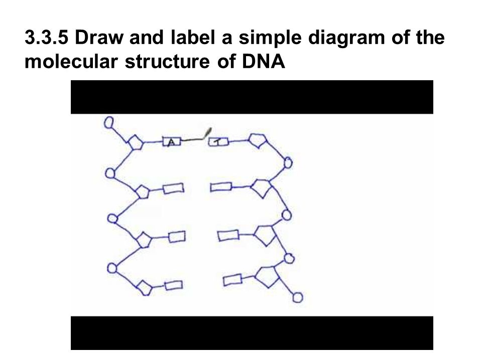 dna 5 3 diagram