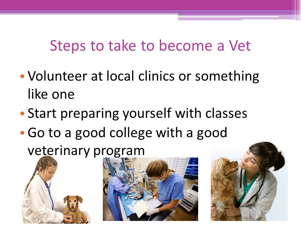 Veterinarian Alex Waters 3rd hour CMT - ppt download