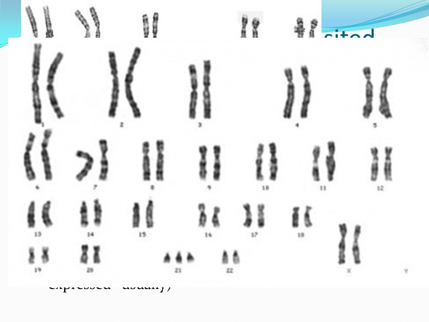 Chromosome Homologue Intro Genetics And Meiosis Ppt Video Online Download