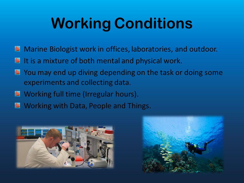Marine Biology 5/8/2014 1st Hour Career Technology - ppt video - marine biologist job description