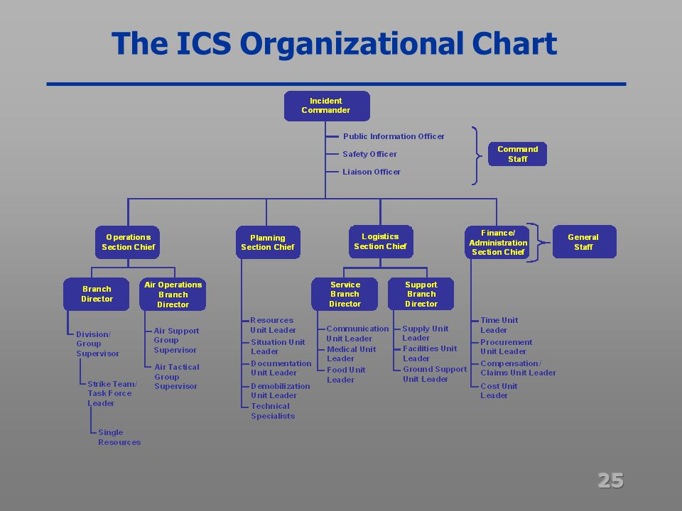 basic org chart