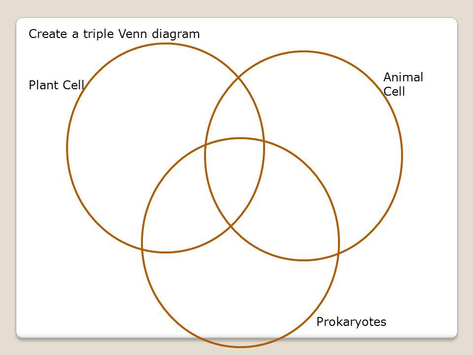 Tri Prokaryotic And Eukaryotic Diagram Diy Enthusiasts Wiring