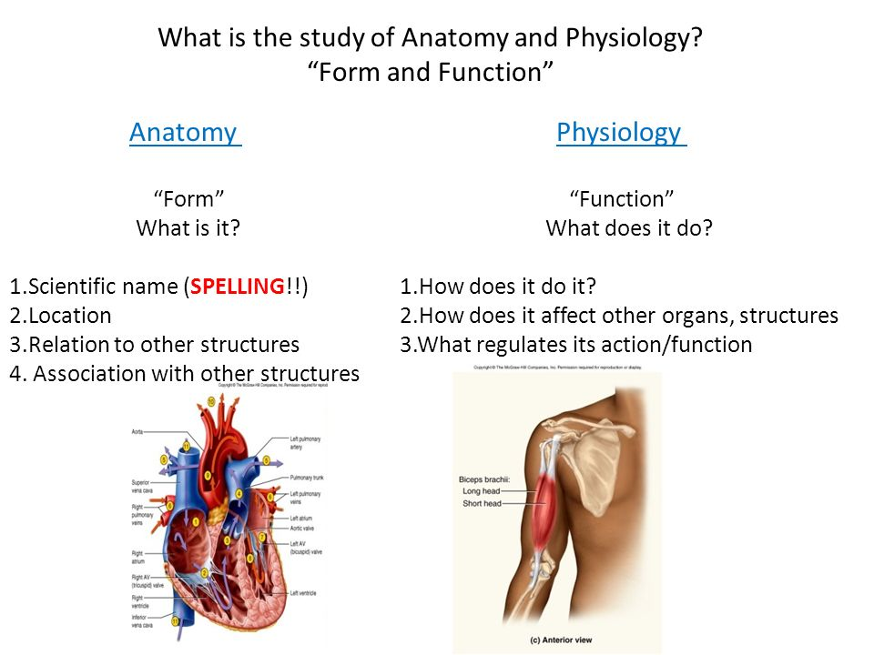 Amazing Gemutlich Why Is It Important To Study Anatomy And ...