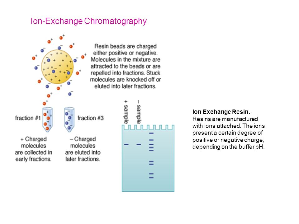 Chromatography - ppt video online download - cation exchange chromatography