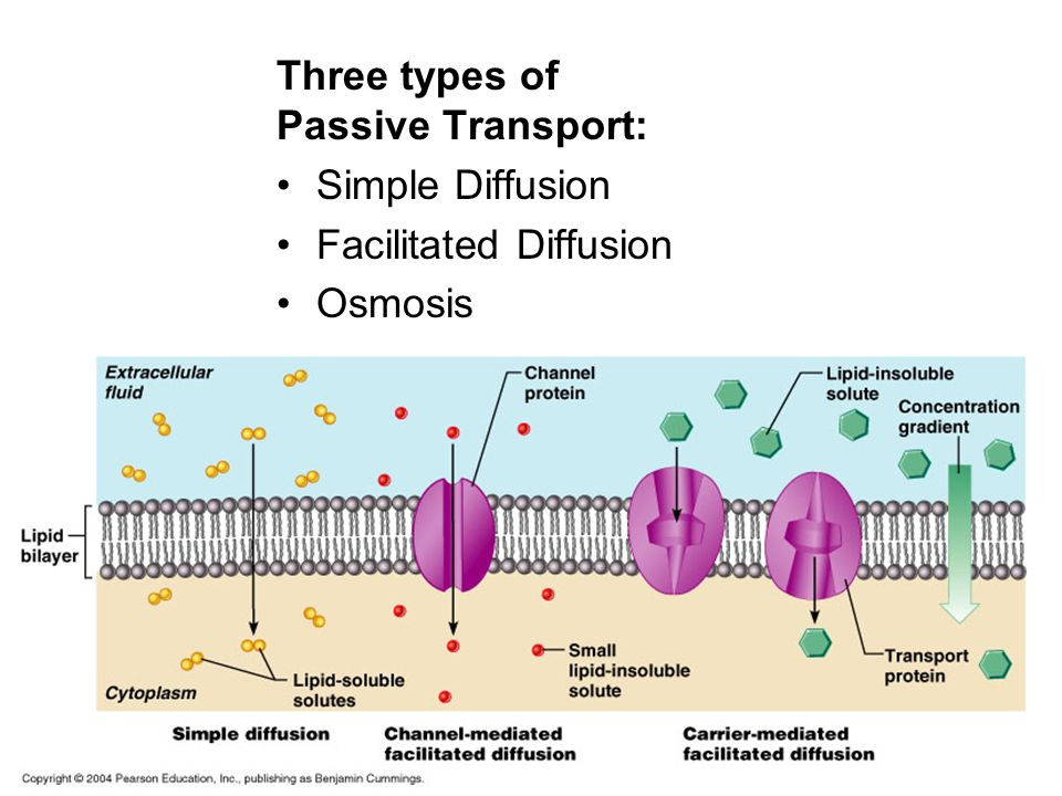 3 types of passive transport -