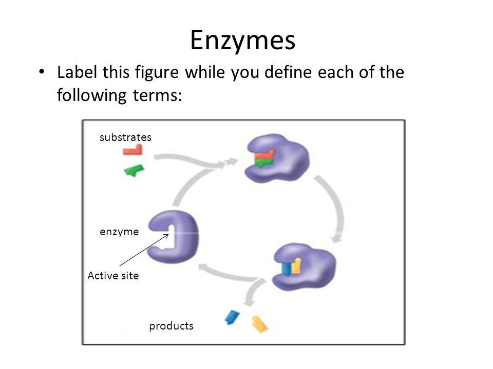 Sb1b Enzymes Sb1c Macromolecules Test Review Ppt