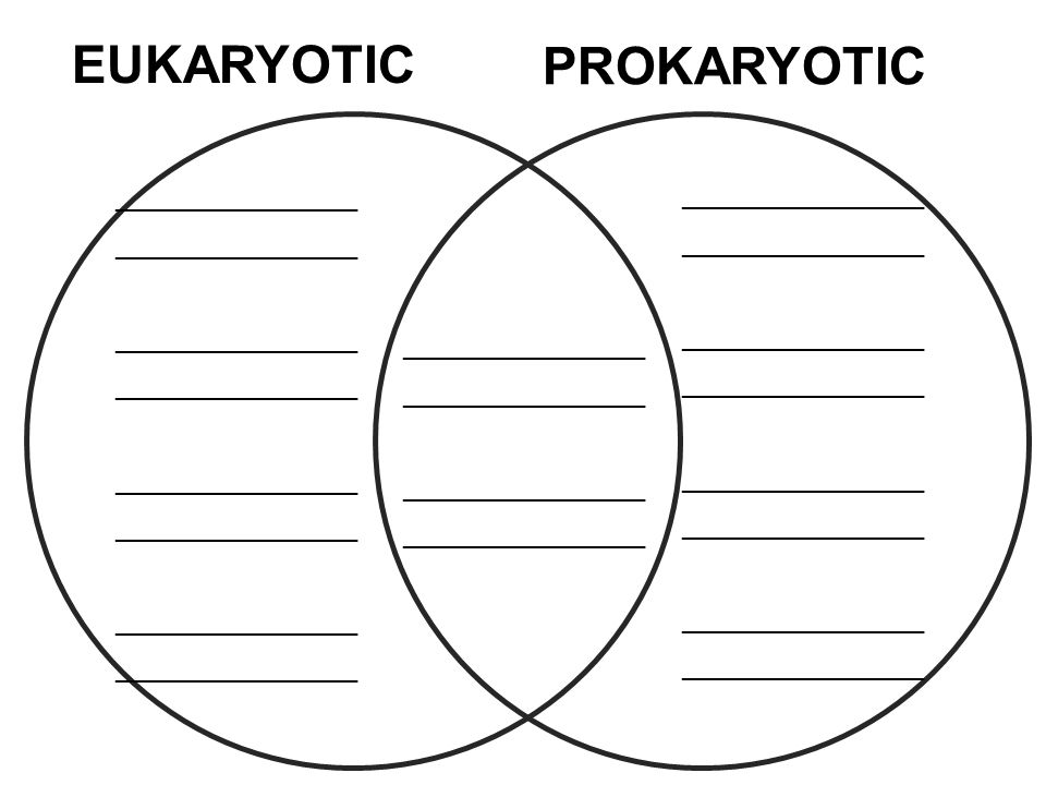 review prokaryotic cells